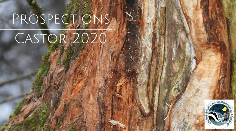 Sortie naturaliste : Prospection Castor !